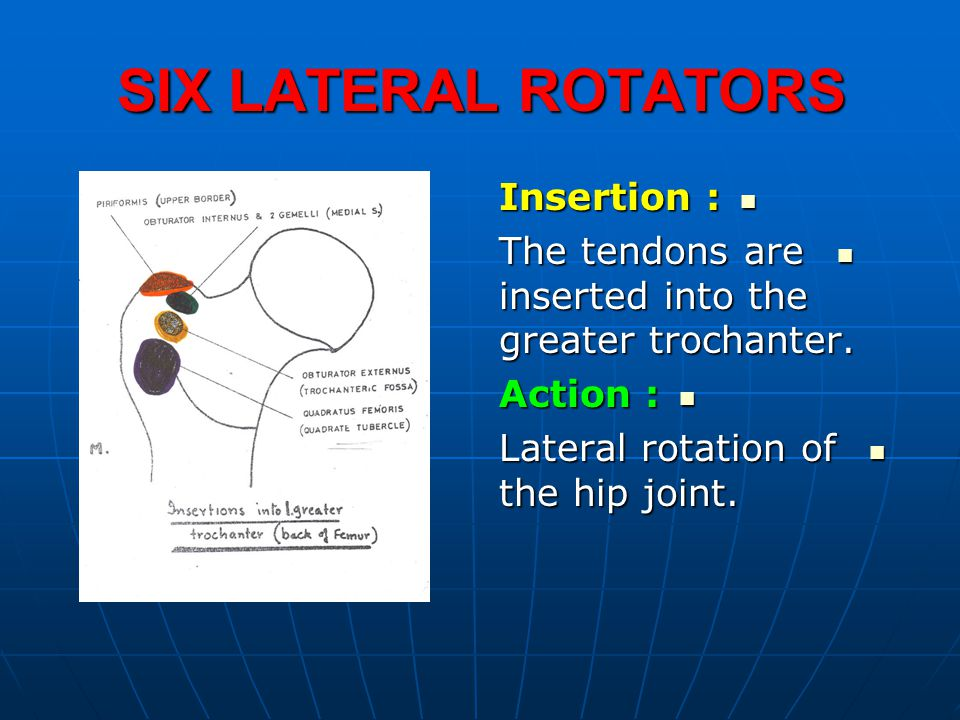 SIX LATERAL ROTATORS Insertion :