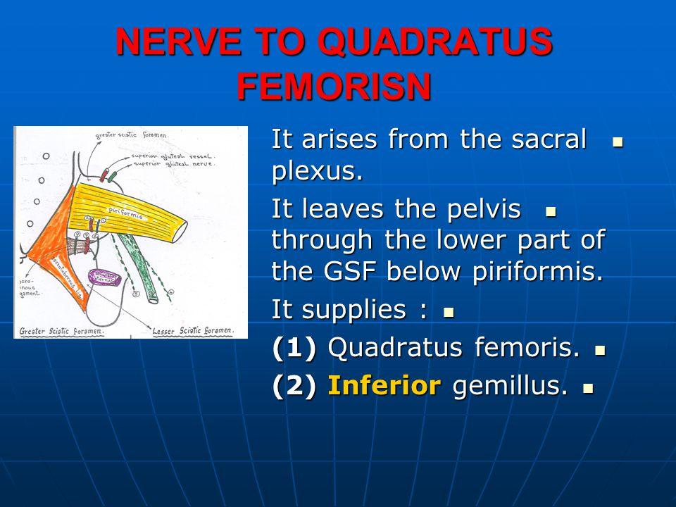 NERVE TO QUADRATUS FEMORISN