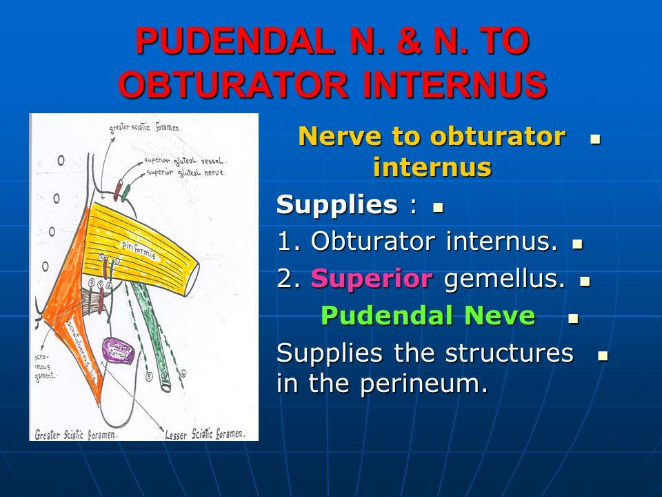 PUDENDAL N. & N. TO OBTURATOR INTERNUS