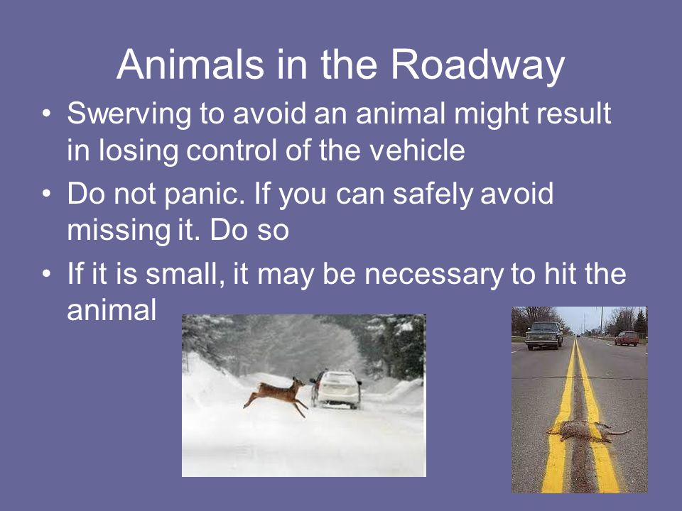 Animals in the Roadway Swerving to avoid an animal might result in losing control of the vehicle.