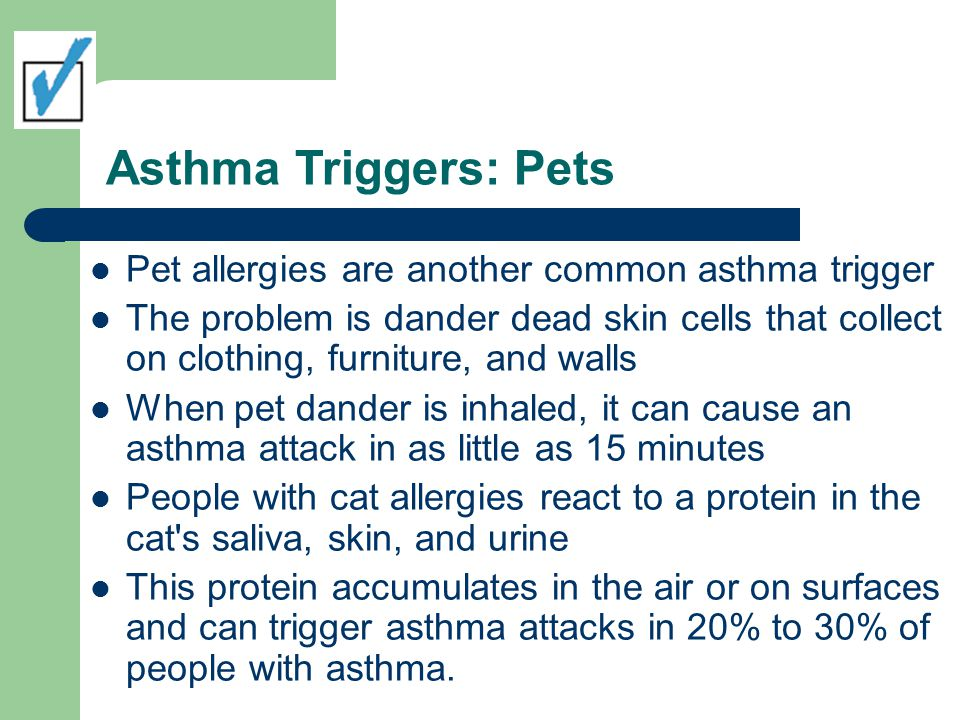 Asthma Triggers: Pets Pet allergies are another common asthma trigger