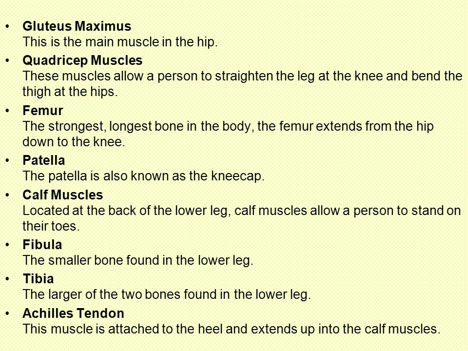 Gluteus Maximus This is the main muscle in the hip.