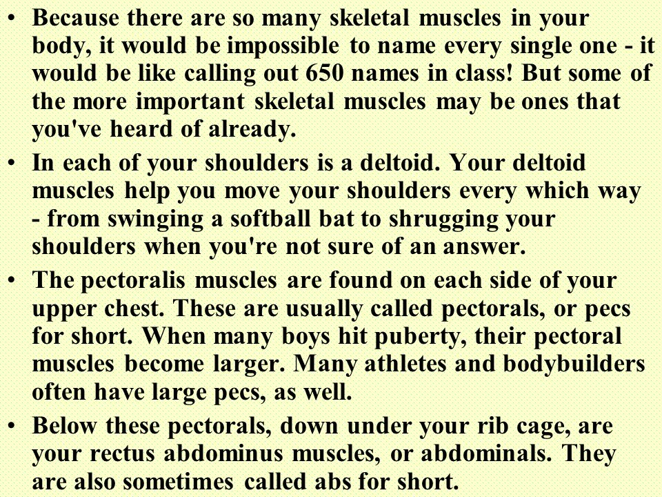 Because there are so many skeletal muscles in your body, it would be impossible to name every single one - it would be like calling out 650 names in class! But some of the more important skeletal muscles may be ones that you ve heard of already.