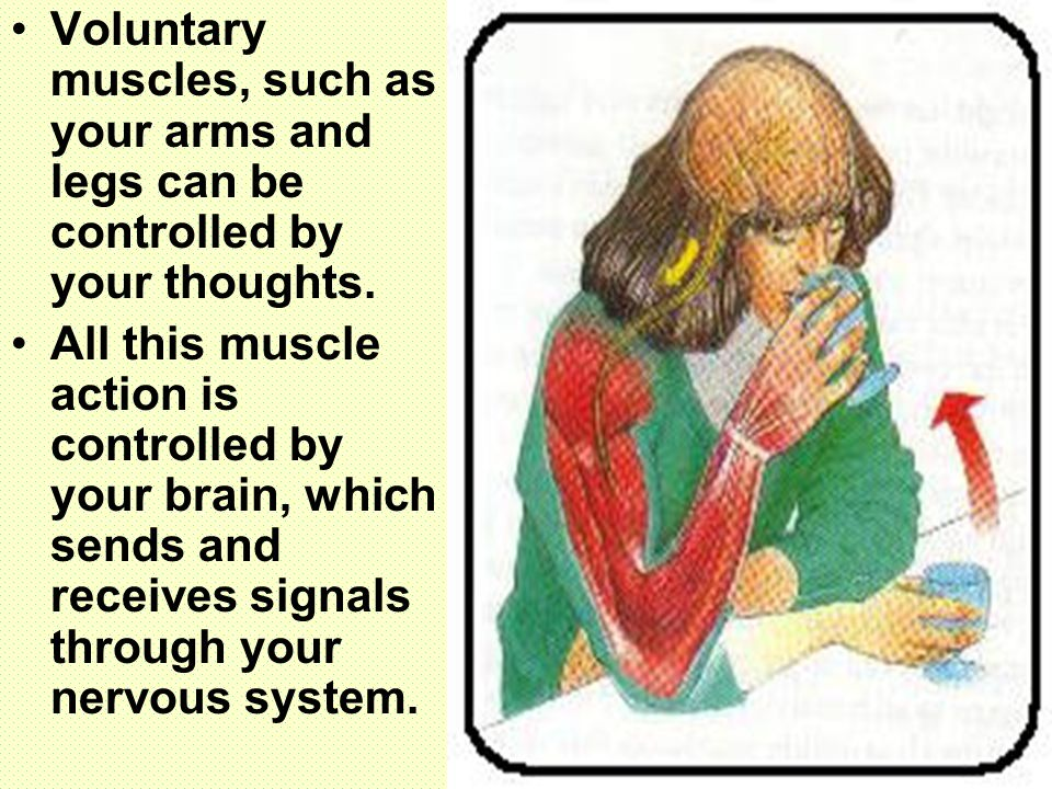 Voluntary muscles, such as your arms and legs can be controlled by your thoughts.