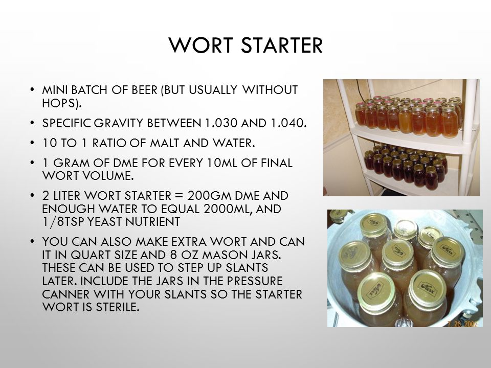 Wort Starter Mini batch of beer (but usually without hops).