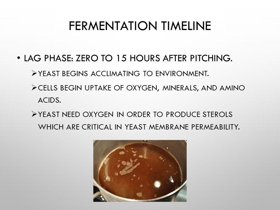 Fermentation Timeline