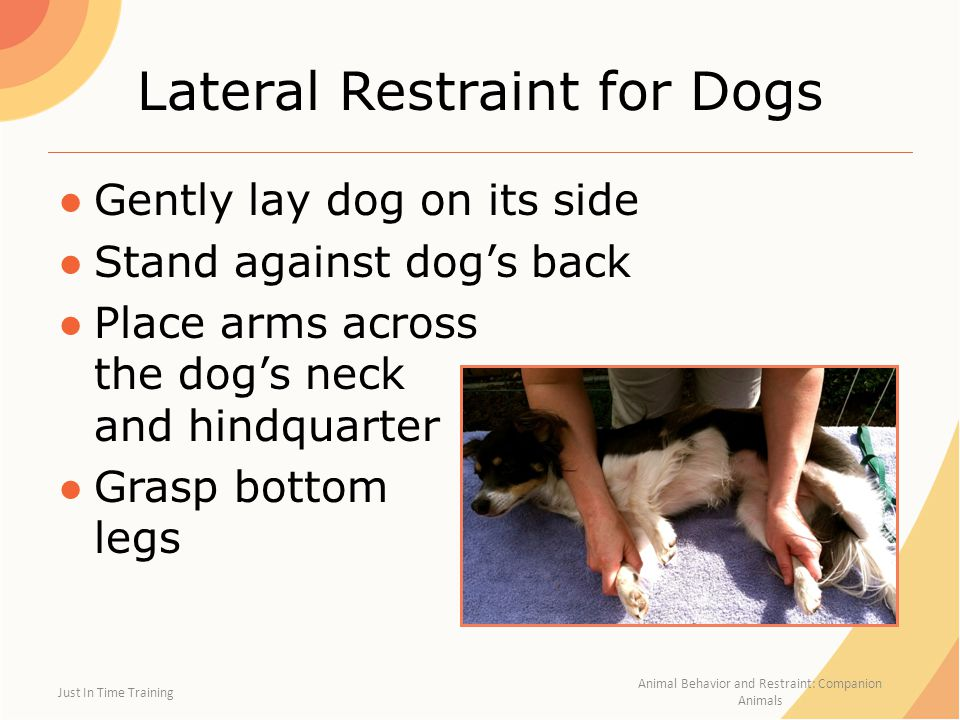 Lateral Restraint for Dogs