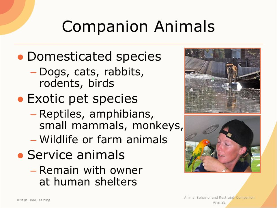 Animal Behavior and Restraint: Companion Animals