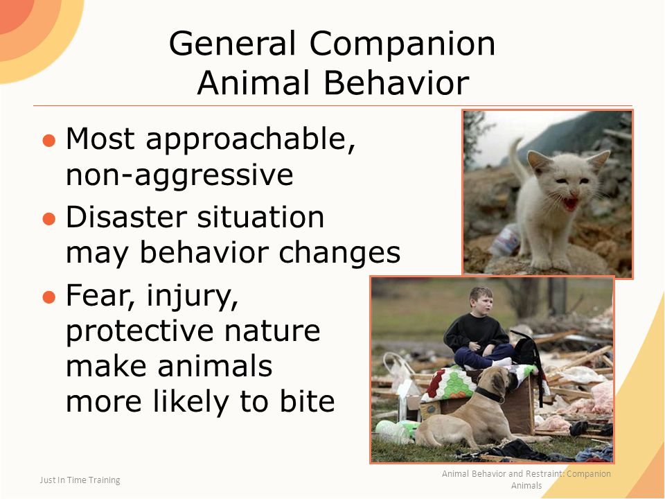 General Companion Animal Behavior