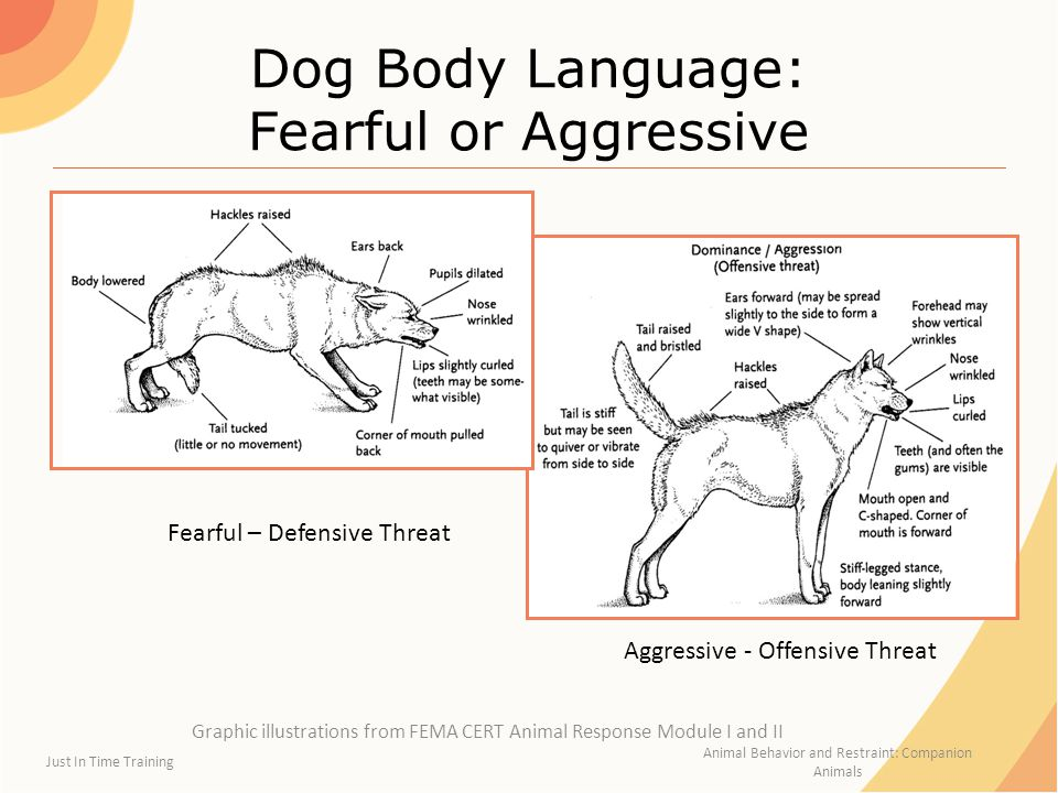 Dog Body Language: Fearful or Aggressive