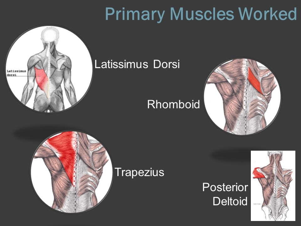Primary Muscles Worked
