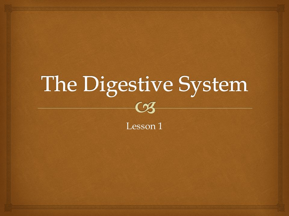 The Digestive System Lesson 1