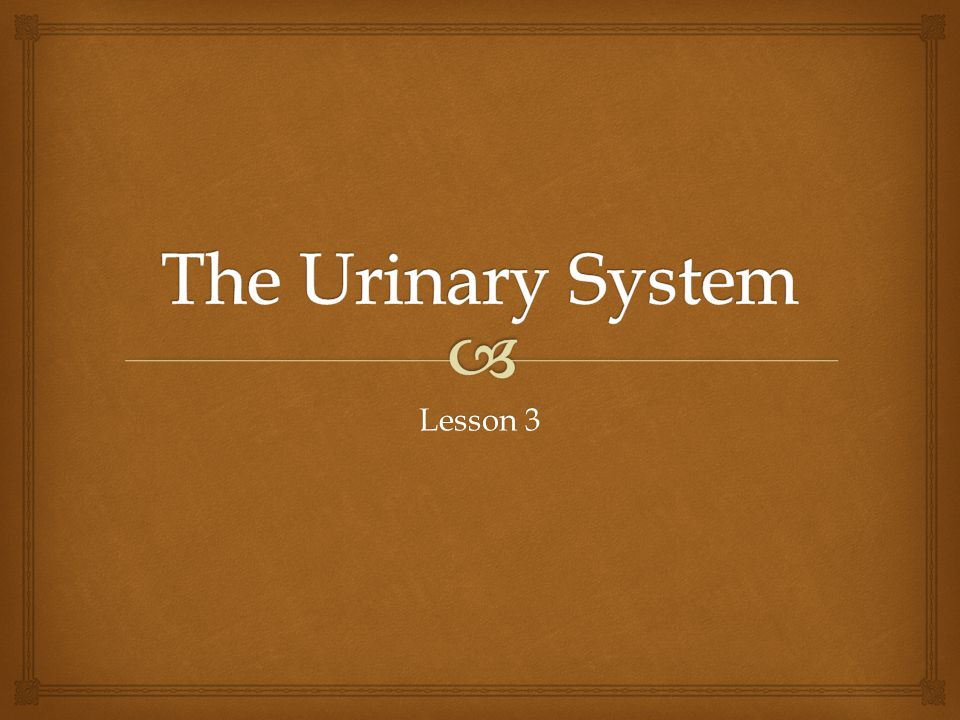 The Urinary System Lesson 3