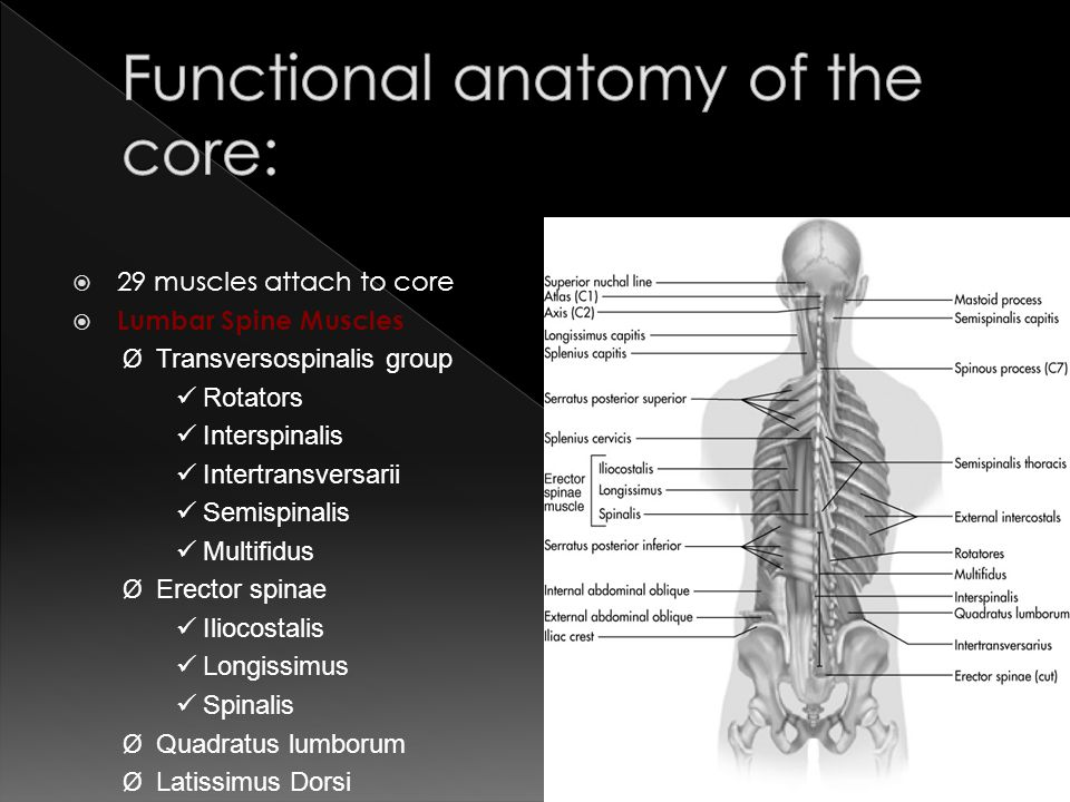 Anatomy of the core
