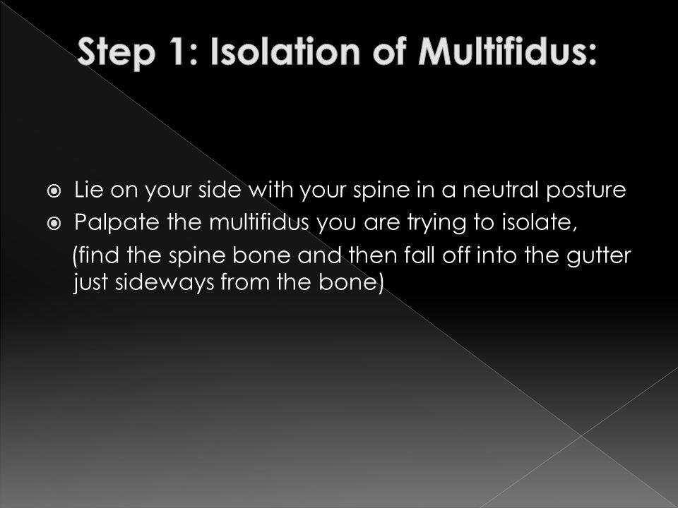 Step 1: Isolation of Multifidus: