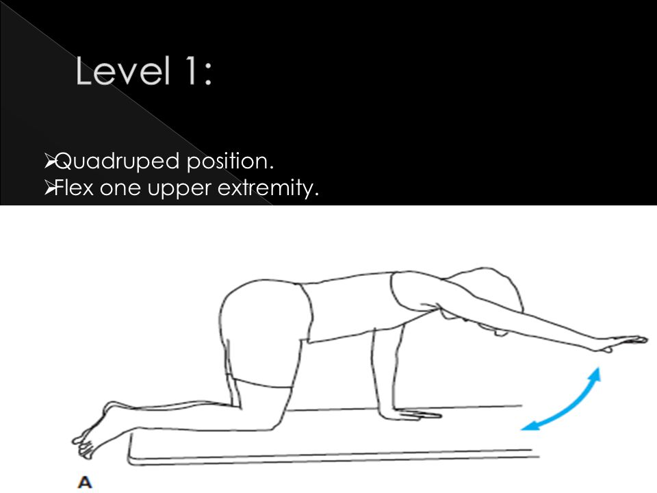 Level 1: Quadruped position. Flex one upper extremity.