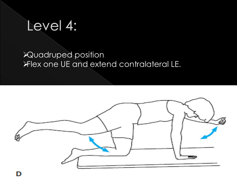 Level 4: Quadruped position Flex one UE and extend contralateral LE.
