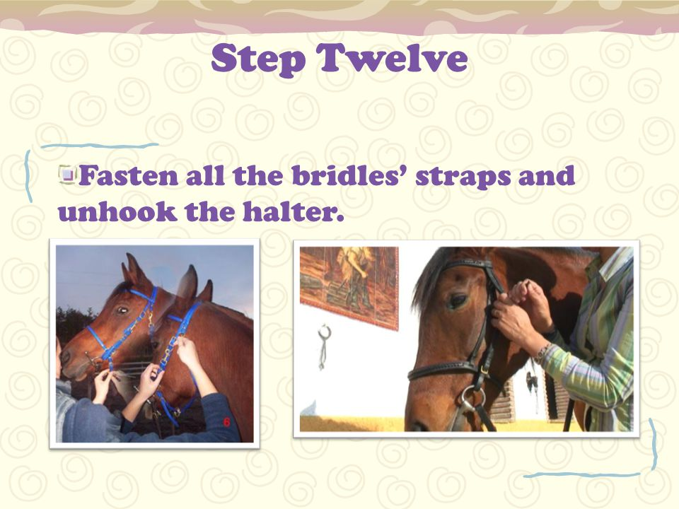 Step Twelve Fasten all the bridles' straps and unhook the halter.