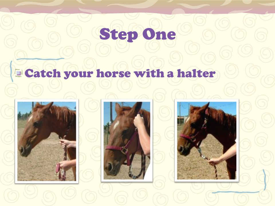 Step One Catch your horse with a halter