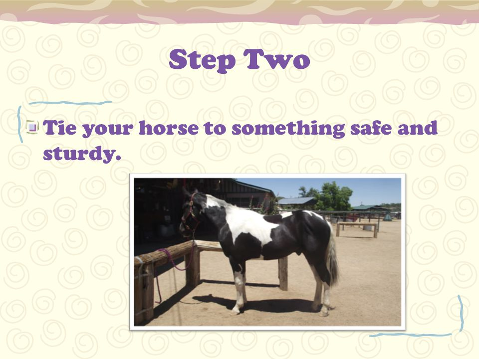 Step Two Tie your horse to something safe and sturdy.