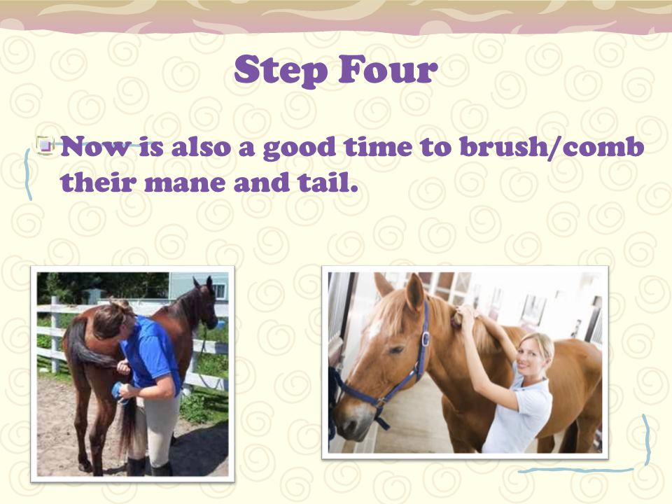 Step Four Now is also a good time to brush/comb their mane and tail.