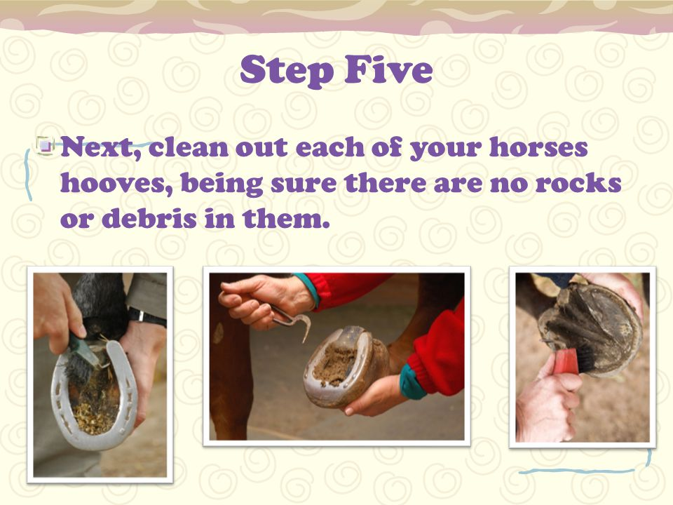 Step Five Next, clean out each of your horses hooves, being sure there are no rocks or debris in them.