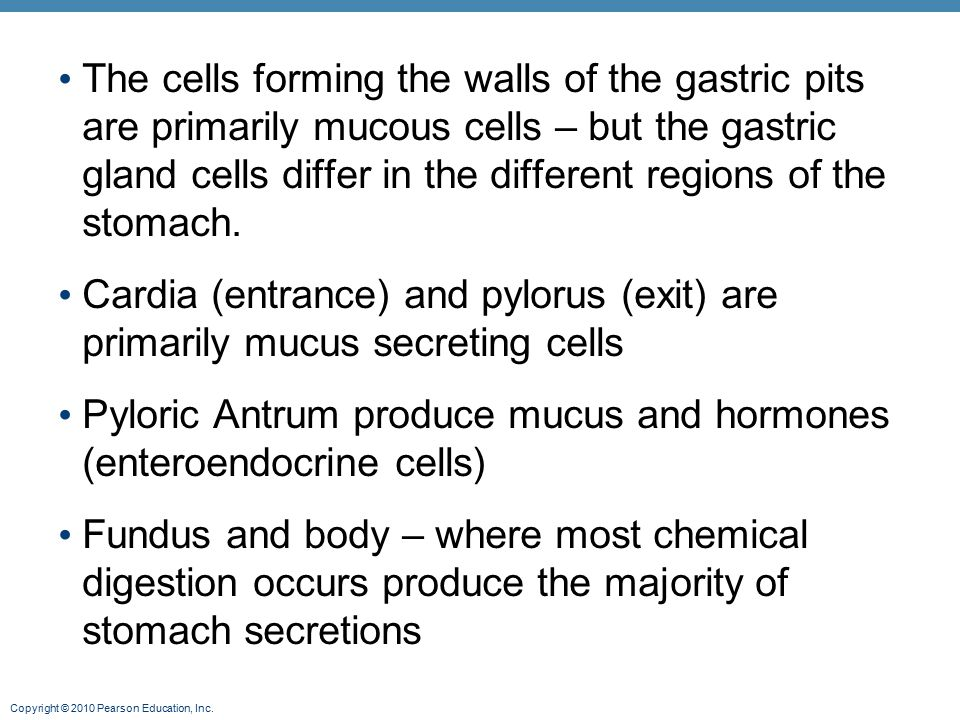 The cells forming the walls of the gastric pits are primarily mucous cells – but the gastric gland cells differ in the different regions of the stomach.