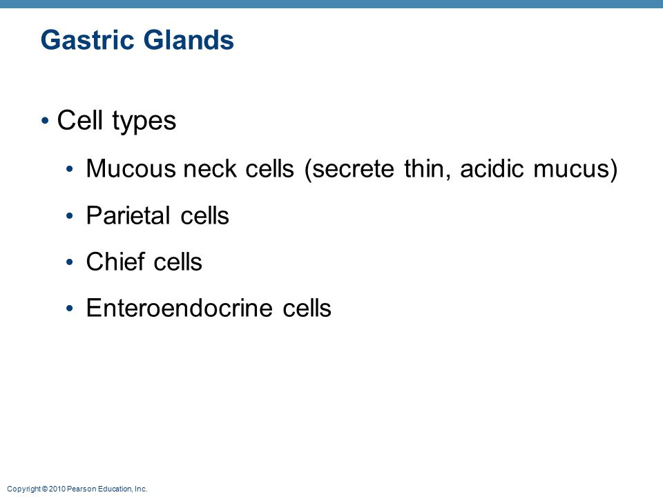 Gastric Glands Cell types
