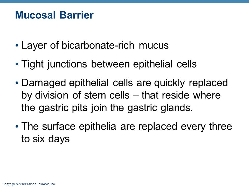 Mucosal Barrier Layer of bicarbonate-rich mucus. Tight junctions between epithelial cells.