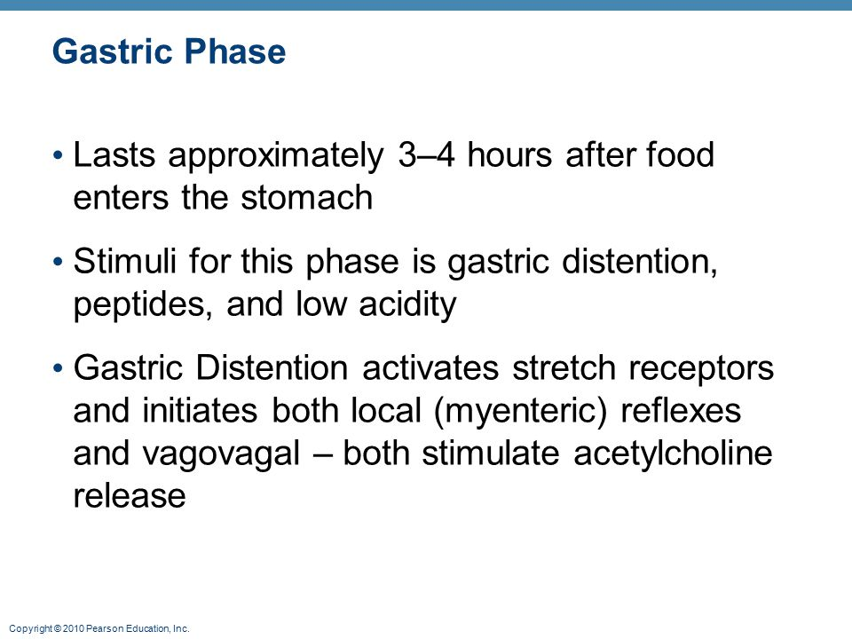 Gastric Phase Lasts approximately 3–4 hours after food enters the stomach. Stimuli for this phase is gastric distention, peptides, and low acidity.
