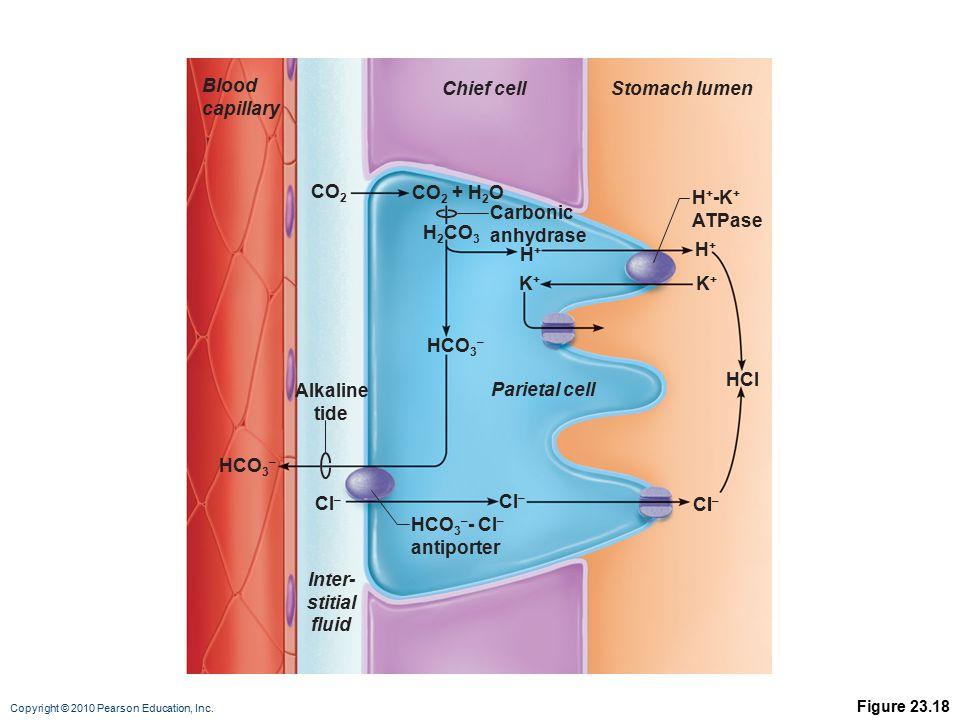 Alkaline tide Inter- fluid