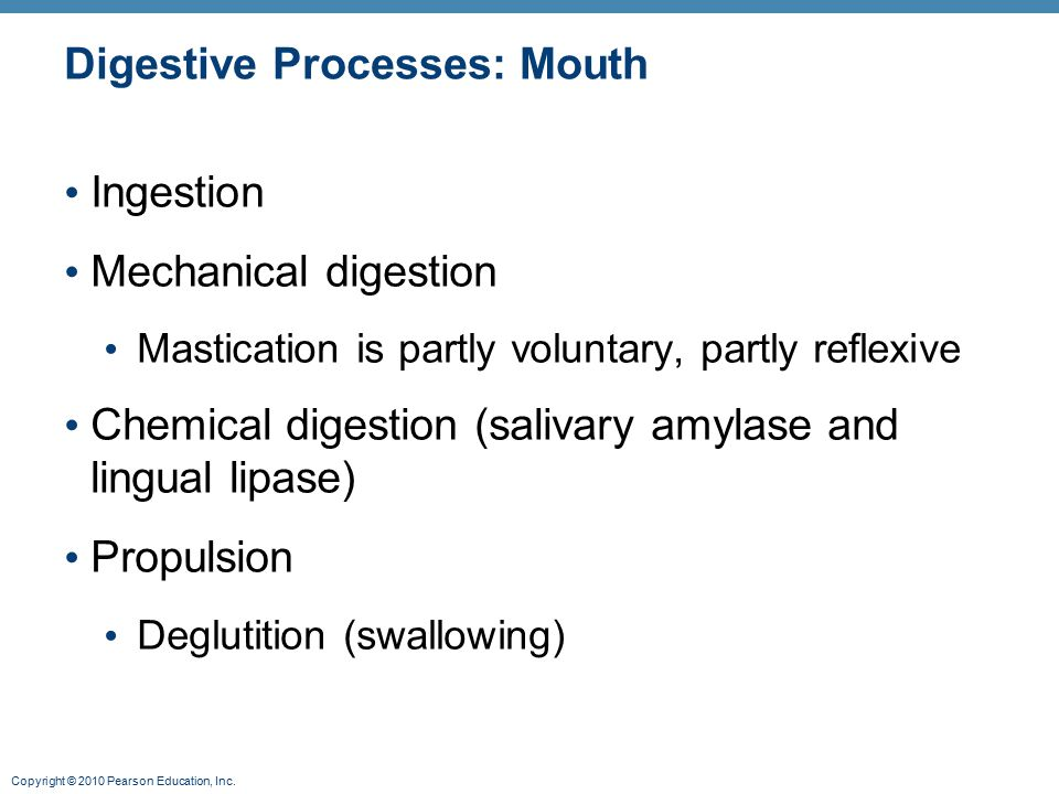 Digestive Processes: Mouth