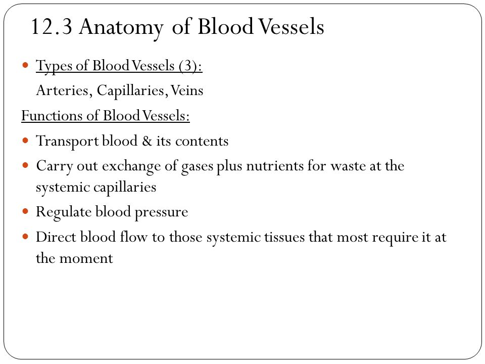 12.3 Anatomy of Blood Vessels