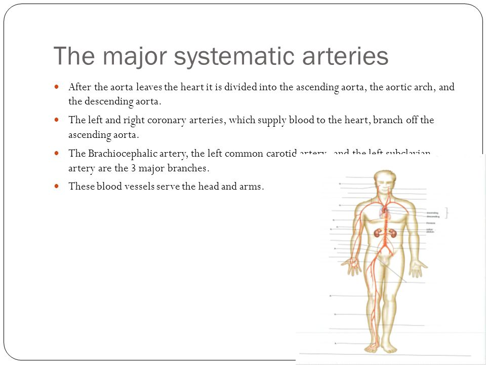 The major systematic arteries