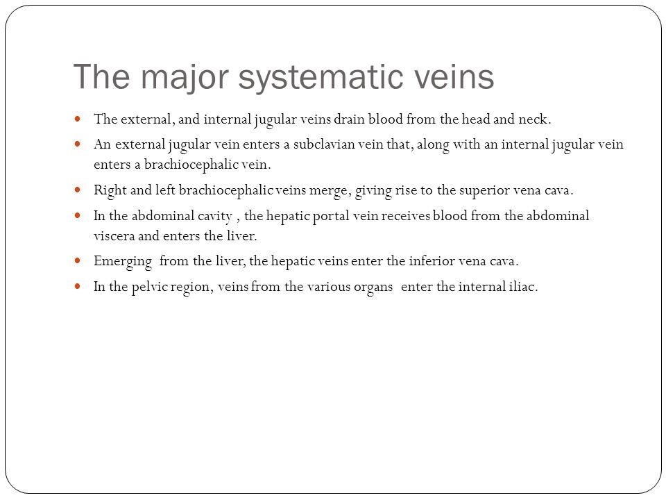 The major systematic veins
