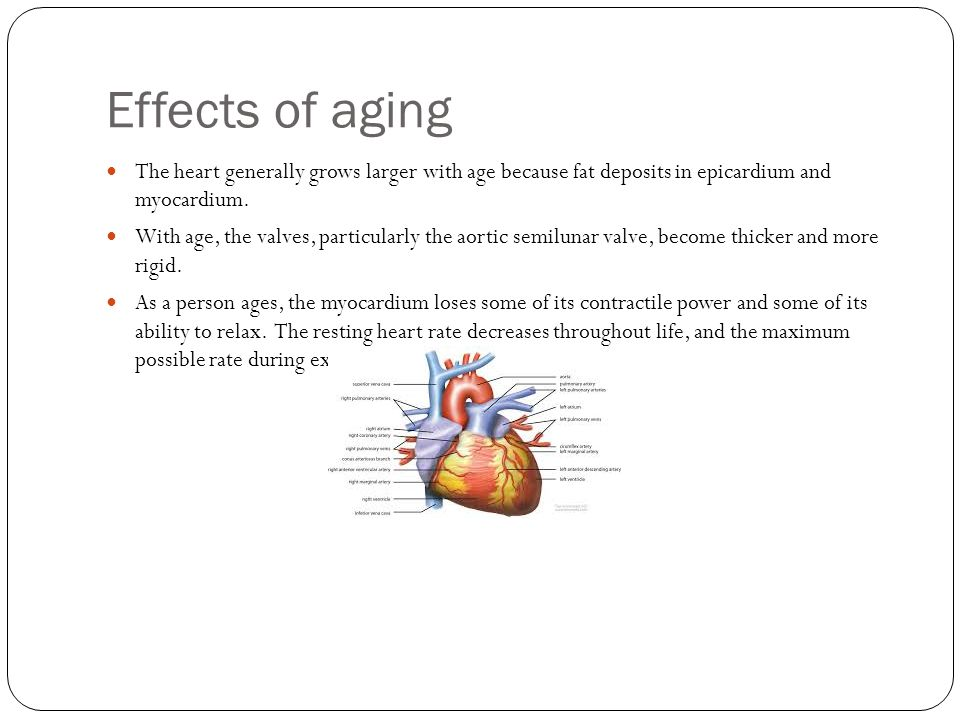 Effects of aging The heart generally grows larger with age because fat deposits in epicardium and myocardium.