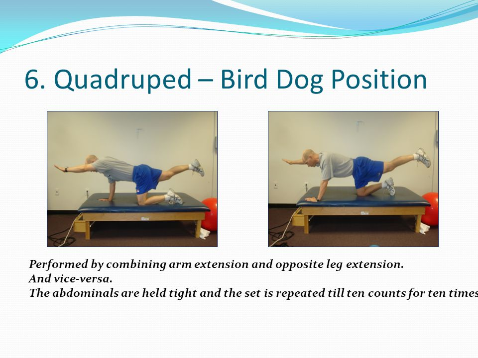 6. Quadruped – Bird Dog Position