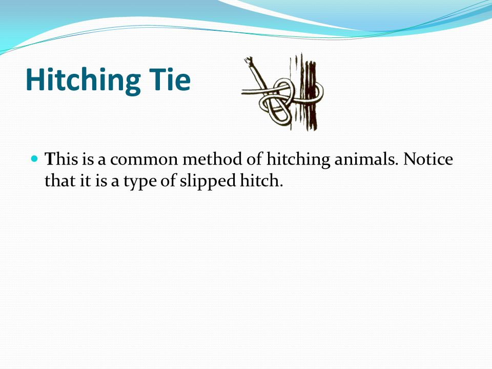 Hitching Tie This is a common method of hitching animals.