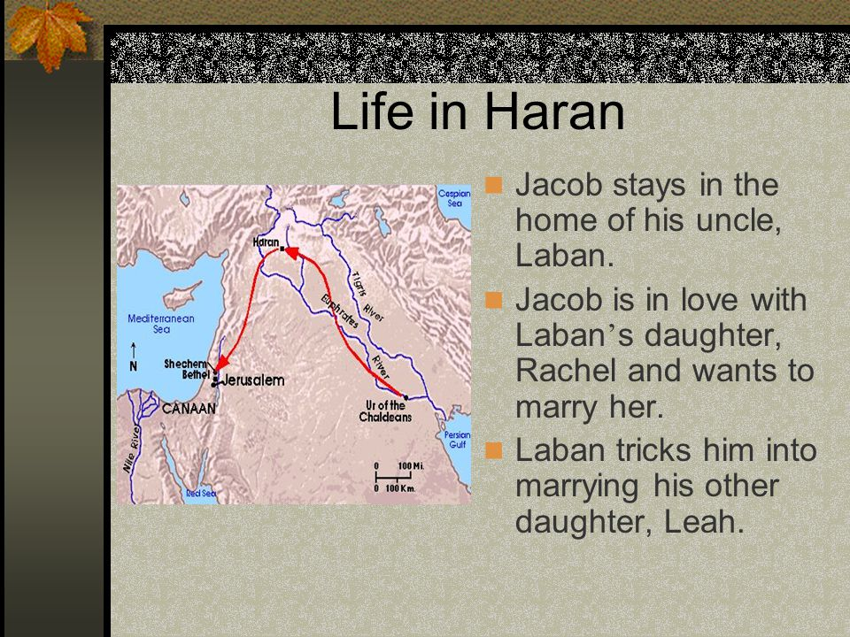 Life in Haran Jacob stays in the home of his uncle, Laban.