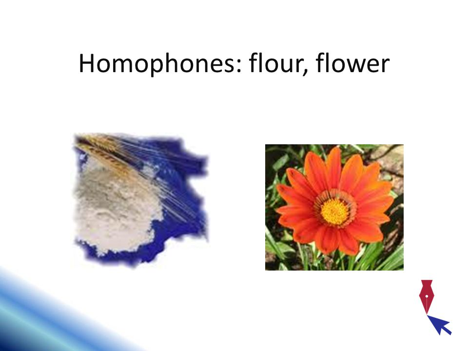 Homophones: flour, flower