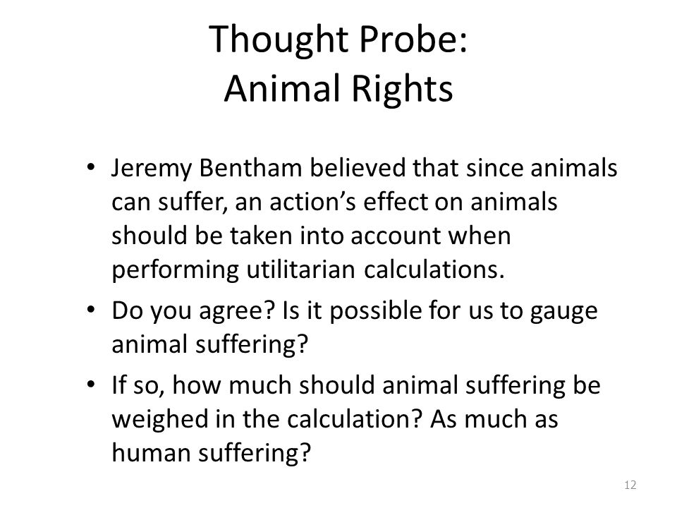 Thought Probe: Animal Rights