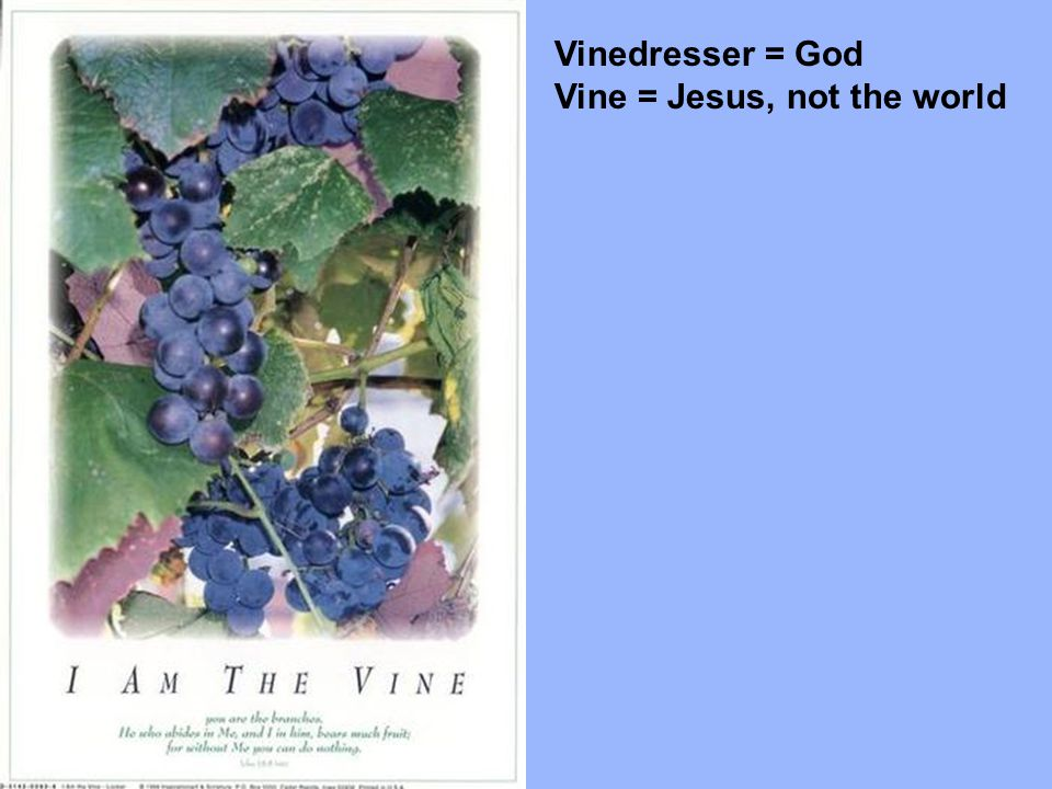 Vinedresser = God Vine = Jesus, not the world