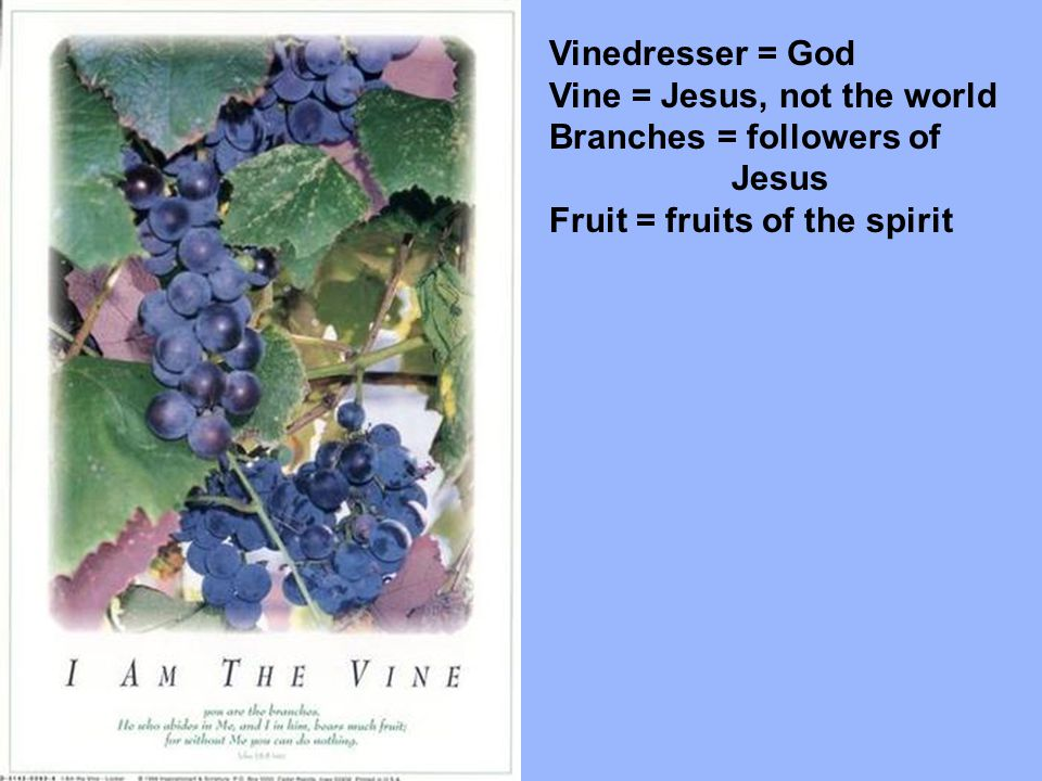 Vinedresser = God Vine = Jesus, not the world. Branches = followers of.