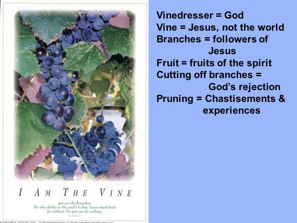 Vinedresser = God Vine = Jesus, not the world. Branches = followers of. Jesus. Fruit = fruits of the spirit.