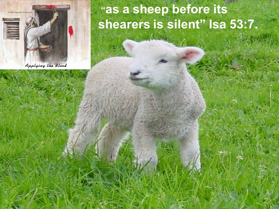 as a sheep before its shearers is silent Isa 53:7.