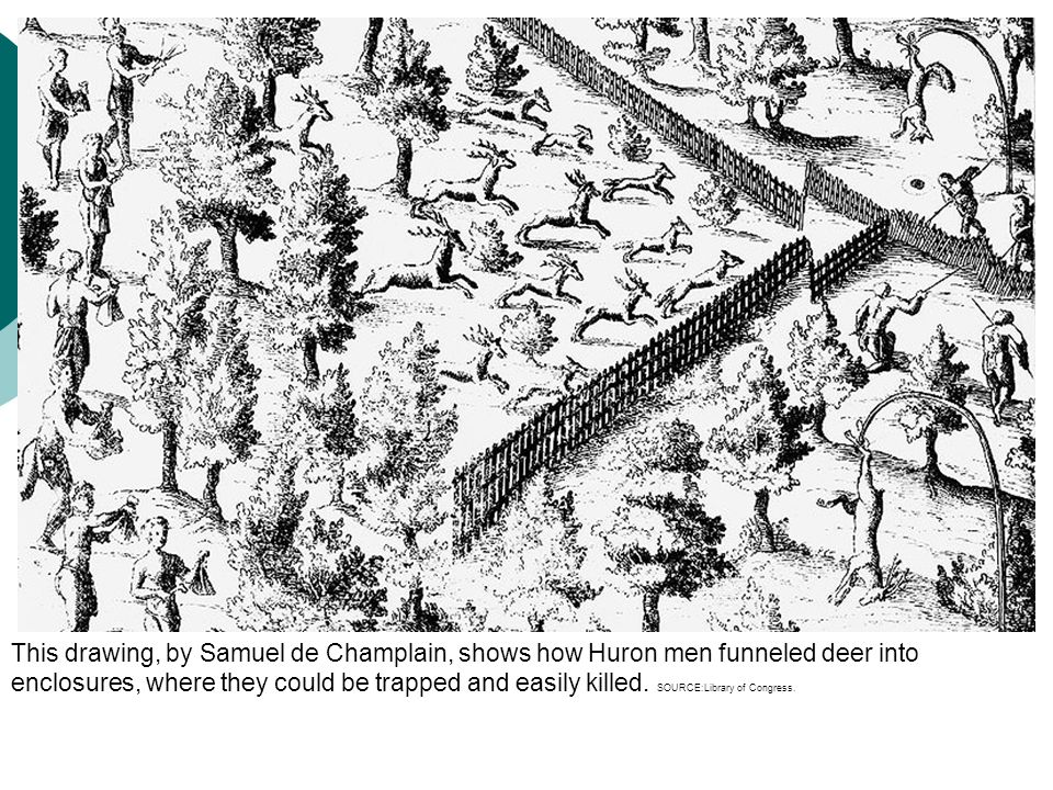 This drawing, by Samuel de Champlain, shows how Huron men funneled deer into enclosures, where they could be trapped and easily killed.