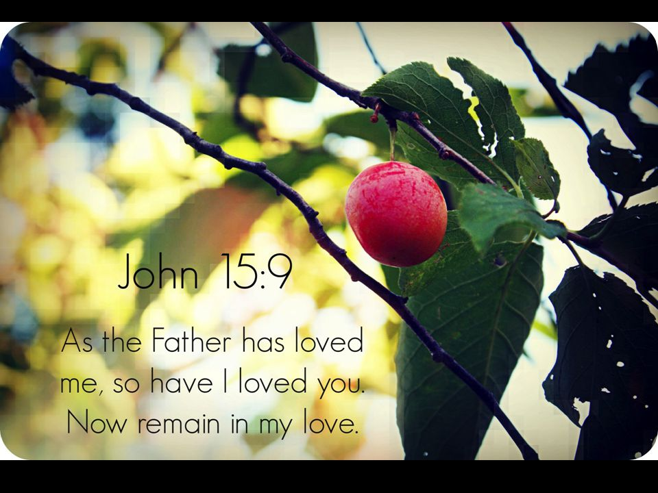 As the Father has loved me, so have I loved you. Now remain in my love.