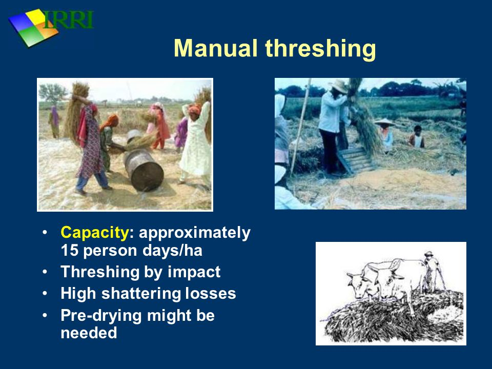 Manual threshing Capacity: approximately 15 person days/ha