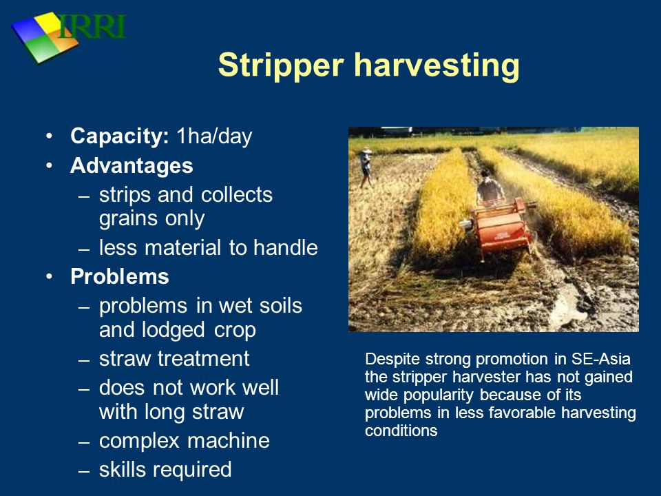 Stripper harvesting Capacity: 1ha/day Advantages