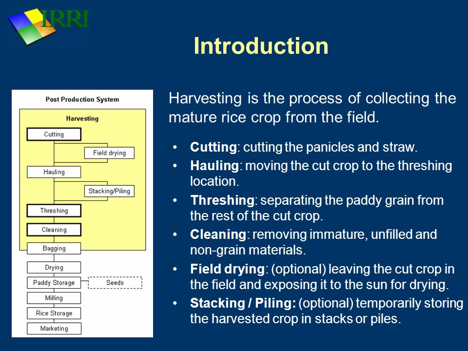 Introduction Harvesting is the process of collecting the mature rice crop from the field. Cutting: cutting the panicles and straw.
